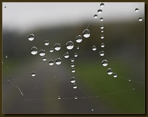 Spinnennetztropfen