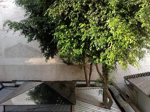 Diese Birkenfeigen wachsen quasi durch unsere Tochtergesellschaft in Sao Paulo und kommen oben wieder raus.