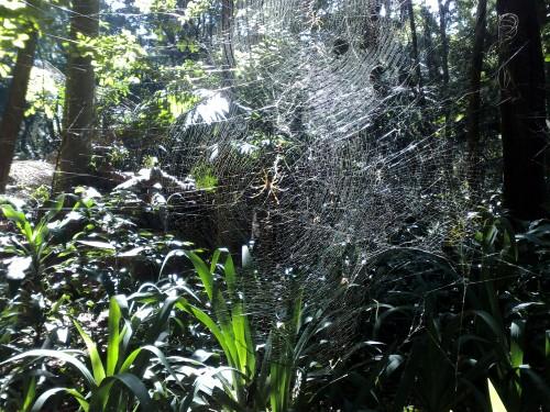 Riesennetz mit Riesenspinne