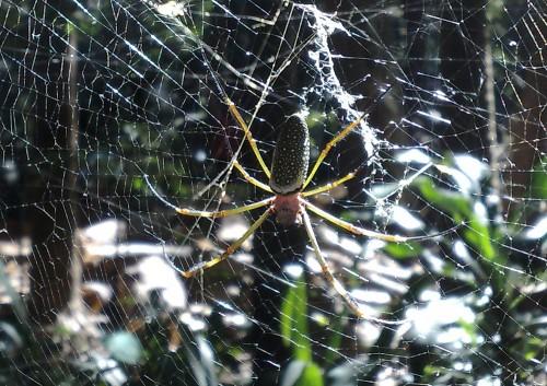 Eine wirklich große Spinne - Für eine Bestimmung wäre ich dankbar