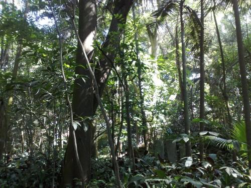 Trianon Park - Ich gaub ich steh im Wald