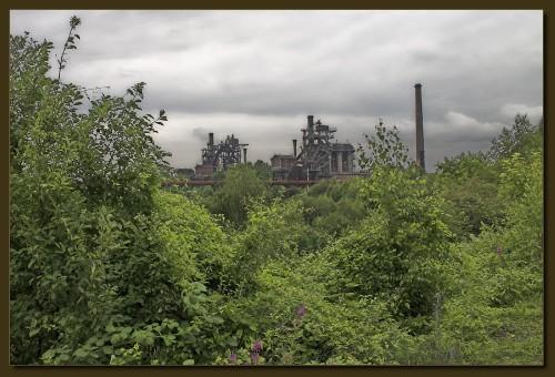 Der grüne Kohlenstoff kommt zurück