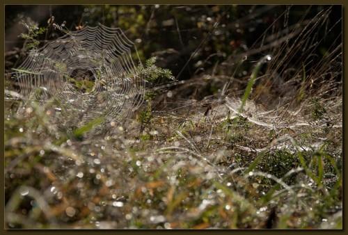 Herbstnetze (KliMaGro)