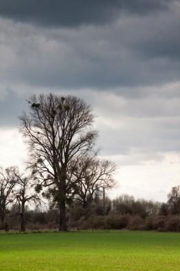 Baum in der Himmelgeister Rheinaue