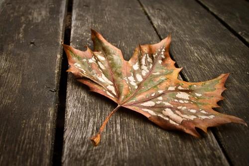 Herbstblatt - die Farben des Herbstes