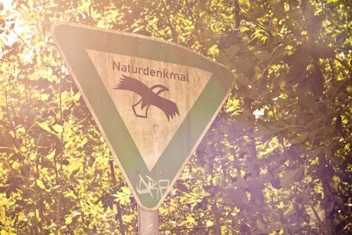 Naturdenkmal im Gegenlicht