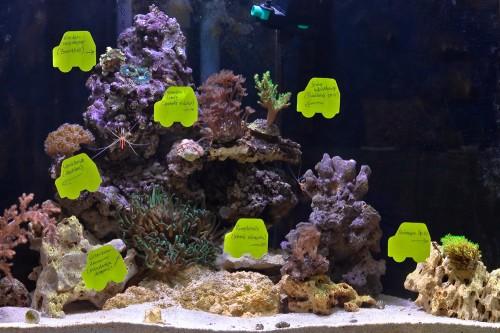 Meerwasseraquarium mit Post its