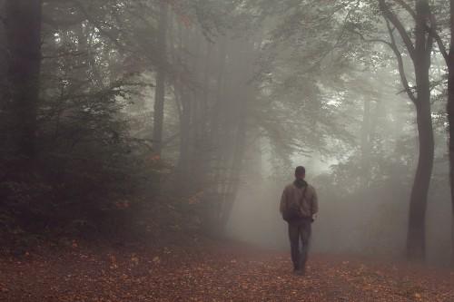 Herr Olsen im Nebelwald